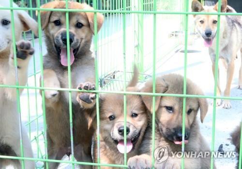 '규제 사각지대' 사설동물보호소…정부, 첫 실태조사 나선다