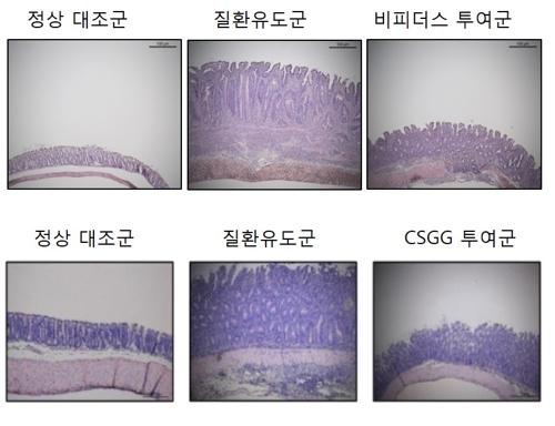 '팔색조' 유산균 프로바이오틱스…면역 치료제 가능성