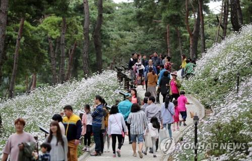 정읍 구절초 축제에 몰린 관광객[연합뉴스 자료사진]