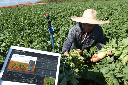 KT·농정원, 'AI로 밭작물 관리' 스마트팜 구축한다