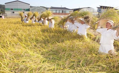 광주 북구,  27일 용전들노래 '가을걷이 한마당'