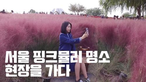 [영상] 핑크뮬리 인생샷 어디서 찍을..