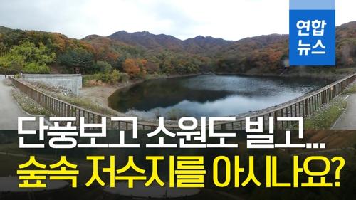 [VR] 단풍보고 소원빌고…서울대공원 비경 숲속저수지