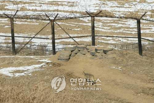 강원도 철원군 중부전선 비무장지대(DMZ)