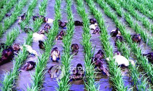강원도 친환경 농가·경지면적 매년 감소세