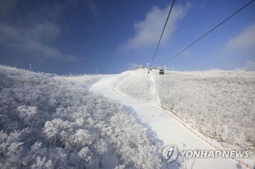 하이원 스키장 이달 말 개장