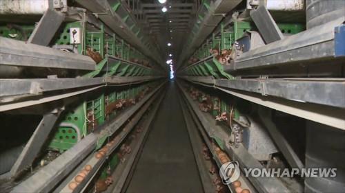 양계장  [연합뉴스TV 제공]