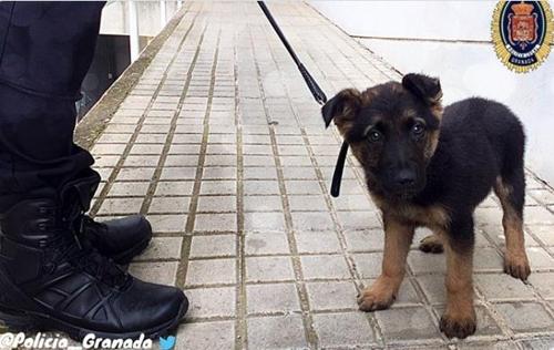 스페인 경찰, 학대받던 강아지 구조한뒤 정들어 채용