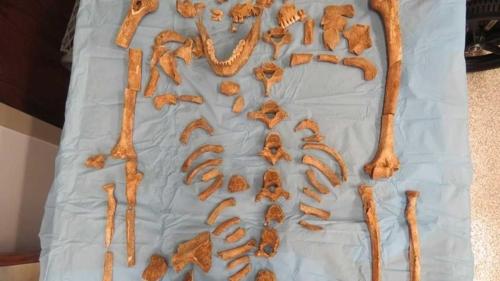 美시카고 교외 주택 정원서 1천년 전 원주민 청년 유골 발견