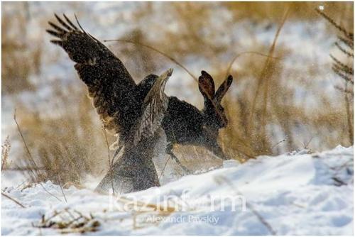 카자흐스탄, 아시아 맹금류 사냥대회 개최