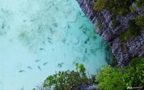 6개월 문닫은 태국 피피섬 마야베이에 상어떼가 돌아왔다