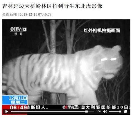 中 지린성서 야생 호랑이 원적외선 카메라에 포착