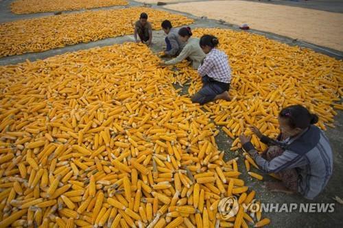 지구 온난화로 곡물생산 증가 정체…한해 48조원 손실