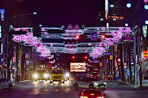 겨울 도심에 벚꽃이 활짝…제천서 18일 축제 개막