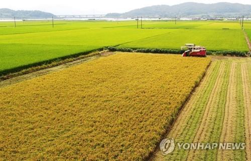 보은군, 쌀 과잉 막기 위해 올해 벼 재배면적 288ha 축소