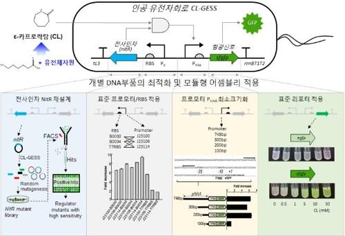 서해 갯벌의 힘…미생물 유전체서 신기능 효소 발견