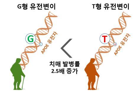 구강 세포 유전자 분석해 치매 위험도 측정…특허 등록