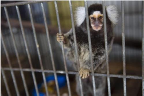 브라질, 올해도 황열병?…상파울루 동물원서 감염 원숭이 발견