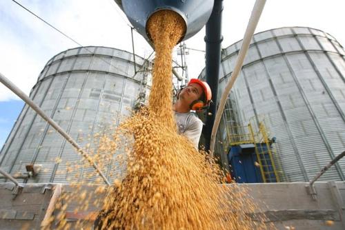 '세계 곡물 창고' 브라질 올해 농산물 수확량 역대 2위 전망
