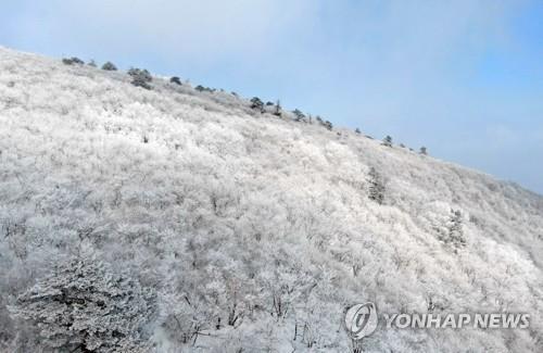 """""""모처럼의 설경 즐기자""""…전국 유명산.."""