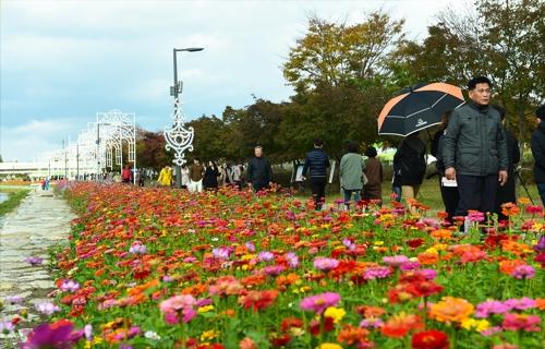 황룡강변 더 화려해진다…장성군, 16만㎡에 형형색색 봄꽃 파종