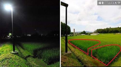 인공조명 '光害' 확산, 식물생육·인간수면에도 영향
