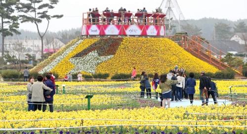 봄꽃 보러 태안으로 오세요  수선화축제·튤립축제 열려