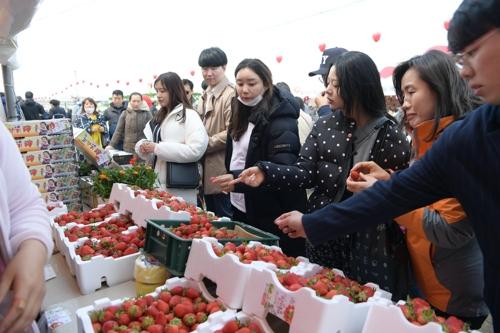 딸기향에 실려 오는… 논산 딸기 축제 20일 개막