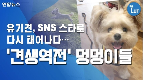 유기견, SNS 스타로 다시 태어나다…'견생역전' 멍멍이들
