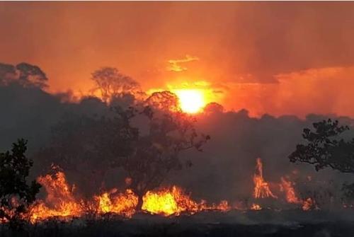 브라질 북부 아마존 열대우림 고온건조한 날씨에 최악 산불피해