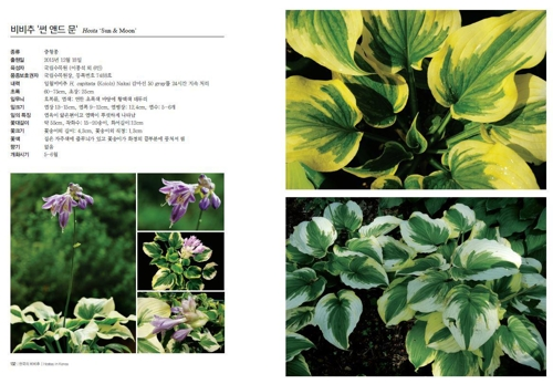 국립수목원, 국내외 '비비추' 150종 식물집 발간