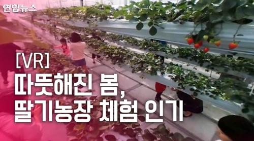 [VR] '딸기 따고 아기 염소랑 놀고'…딸기농장 체험