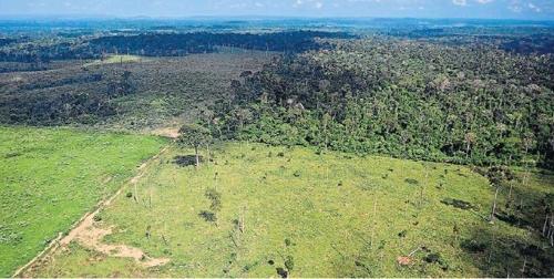 아마존 열대우림 파괴 가속…5월에만 축구장 7천개 면적 사라져