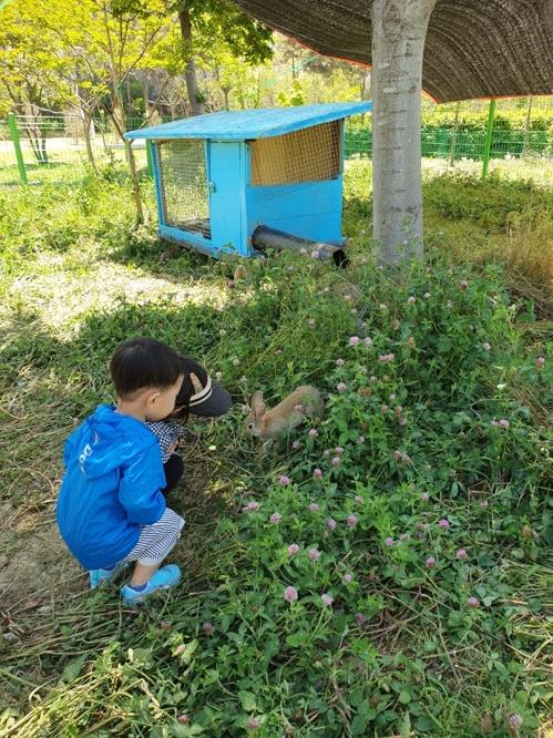 '토끼가 예초작업을'…광주 북구, 방목으로 잡풀 제거