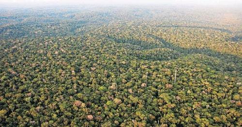 브라질, 삼림보호구역 토지 몰수에 '아마존 기금' 사용 검토