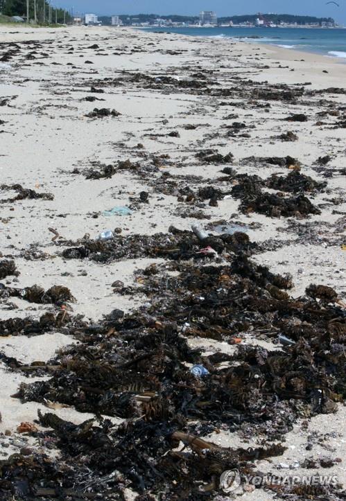 백사장 사라지고, 쓰레기로 몸살 앓는 강릉지역 해수욕장