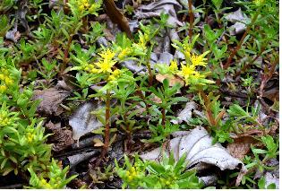 제주 곶자왈 등 특이생육지서 국내 미기록 식물 5종 발견