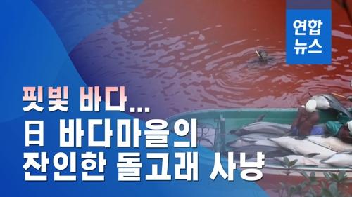 핏빛 바다…일본 바다마을의 잔인한 돌고래 사냥
