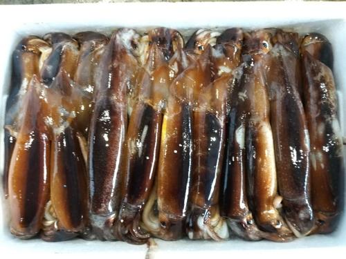 홍어로 유명한 신안 흑산도, 오징어 대풍으로 들썩