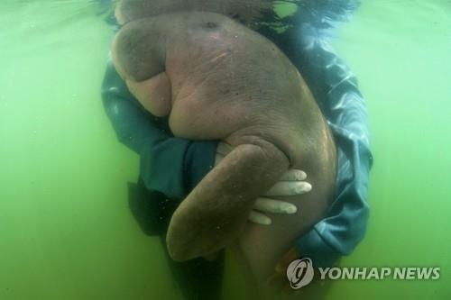 '뱃속에 플라스틱' 아기 듀공 죽음에…해양 쓰레기 다시 주목