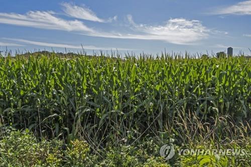 """""""美중서부 옥수수·대두 작황, 예상에 비해 호조"""""""