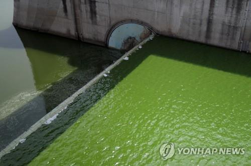 낙동강 강정·고령 조류 '경계'경보 발령…유해남조류 급증