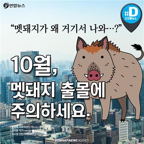 """[카드뉴스] """"멧돼지가 왜 거기서 나와?""""…10월, 멧돼지 출몰 주의하세요"""