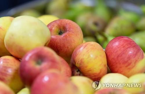 충주 시민단체, 사과나무 축제 중단 ..