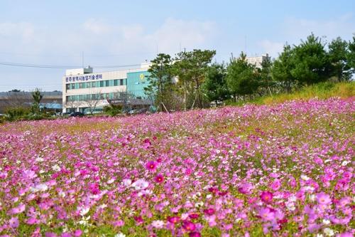 광주시 농기센터, 국화·코스모스 가득 가을농업정원 개방