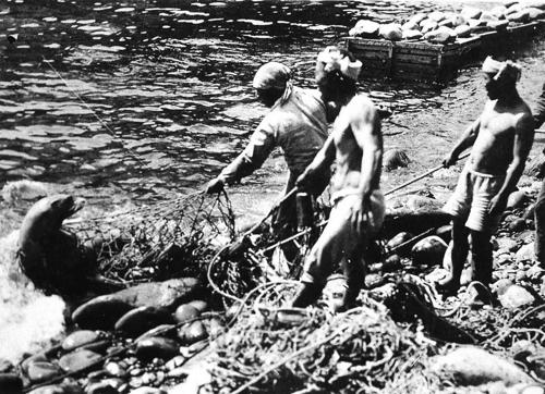 일제가 멸종시킨 독도 강치 기리는 헌정 전시 연다