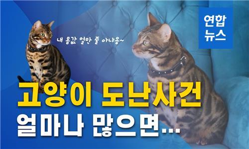 고양이 도난사건에…반려묘에 마이크로칩 심는 영국