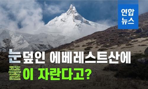 에베레스트산에 풀이 자란다고?…지구온난화 우려 확산