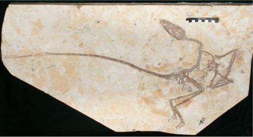 '발해의 춤추는 공룡' 1억2천만년 전 화석 발굴