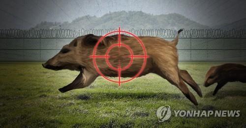 멧돼지 공격받은 삼척의 대반격…3년간 3천541마리 소탕